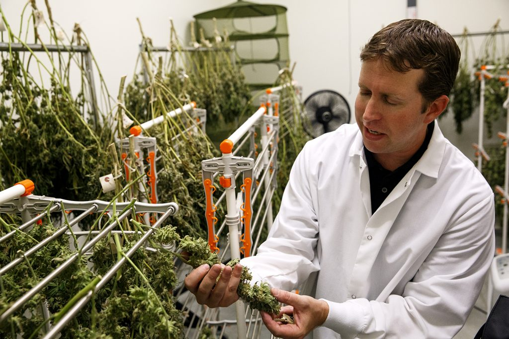 Jason Nelson is director of cultivation at Cresco Labs' medical marijuana cultivation center in Joliet Wednesday, Aug.10, 2016. Rich Saal/The State Journal-Register