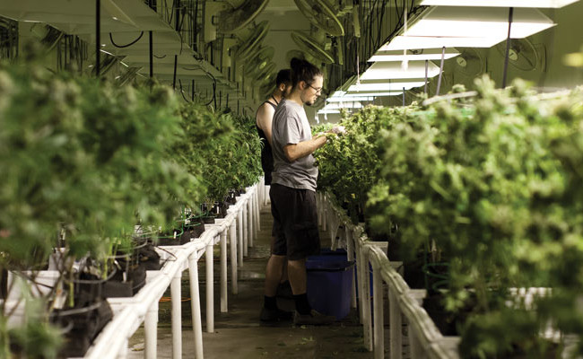 Cannabis-business-courses